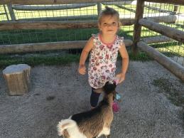 millie goats